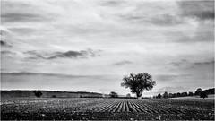 The small Tree... (Ody on the mount) Tags: anlässe bäume em5ii felder fototour himmel mzuiko2518 omd olympus pflanzen schwäbischealb wanderung wolken bw clouds monochrome sw sky tree