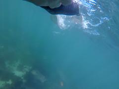GOPR0282.00_03_55_25.Still023 (Compassionate) Tags: lajolla lajollacove lajollashores snorkel snorkeling ocean sea swimming