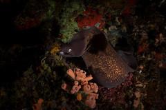 IMG_6981 (Gil Xavier) Tags: underwater scuba philippines canon fantasea g7xmk2 cebu moalbal turtlebay