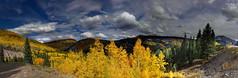 Colorado aspen glory (Chief Bwana) Tags: co colorado us550 aspens fallcolors forest mountains psa104 panorama chiefbwana