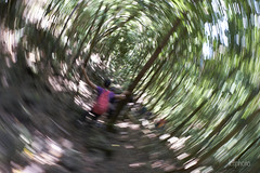 _LC37950_resized (lctphoto) Tags: dizzy trail trees forest trekking shady