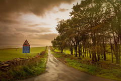 2nd October 2018 (Rob Sutherland) Tags: autumn light road knottallow ulverston steep hill warning 20 wet lane rural field fields agriculture farm farming trees wood woodland sky golden wall drystone cumbria cumbrian england english uk britain british furness