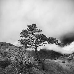 Lost Mine Trail (belashti) Tags: bigbend bigbendnationalpark nationalpark westtexas texas lostminetrail tree amr027779 nikon d750