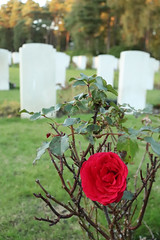 In full colour (kimberley07) Tags: brookwood woking surrey military cemetery grave autumn october remeberance