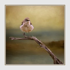 Small Bird; Big Attitude (Christina's World Off and On) Tags: nature naturallight autumn artistic bird bright brown creative california colorful digitalart dramatic digitalpainting dusk serene frame garden gold goldenhour impressionism impressionistic sky light mood morning naturepreserve neighborhood outdoors painterly plant square sandiego scenic textures trees tree unitedstates usa view yellow golden sparrow branch botanicgarden