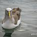 A Visit to Stewart Island/Rakiura