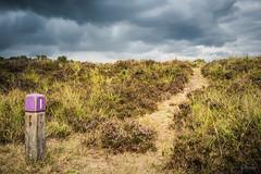 Dreigende lucht boven het Groote Zand in Hooghalen (Gerrit Veldman) Tags: drenthe dutch grootezand holland hooghalen middendrenthe nederland netherlands heide heath heathland heideveld lucht wolken sky clouds landschap landscape wandelroute natuur nature drentselandschap olympus epl7
