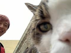 Blenheim Place (sichunlam) Tags: 🐈 🐱 😺 blenheimplace brighton gato sichunlam eastsussex england siishell mintchocicecream