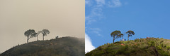 One location, Different time (langthangdaydo) Tags: tree trees tre trekking treking trekker hike hiking together sky blue bluesky mountain mountains mountainside forest nature fog foggy upland hill