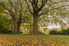 October_Autumn (Joop_K) Tags: trees tamronsp1530mmf28divcusd autumn boom herfst nikond850