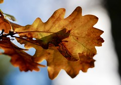 Who let the dogs out (docwiththecamera) Tags: shadow dog autumn leaf leaves nature light