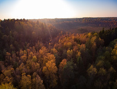Colours of Fall (Topolino70) Tags: xiaomi midrone fall autumn tree leaf forest swamp sunbeam nature