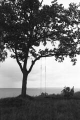 Gyngen er ledig (holtelars) Tags: asahi pentax spotmatic sp m42 supertakumar takumar 28mm f20 film 35mm analog analogue ilford fp4 ilfordfp4 100iso d76 bw blackandwhite monochrome filmphotography filmforever ishootfilm larsholte homeprocessing jobo atl1500 gilleleje denmark danmark landscape seascape tree melancholy