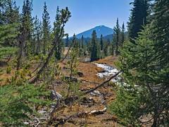 tl1110225SparkleCreekAndBachelor (thom52) Tags: central oregon bendor todd lake conc thom sparks hiking broken top fall