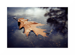Drifting in the sky. (GlebLv) Tags: sony a6000 sigma30mmf14dcdncontemporary leaf puddle reflection october mood autumn leaves 2dwf smileonsaturday natureisanartist
