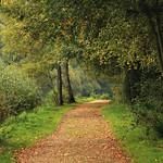 Chemin d'automne thumbnail
