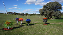 #21 Coloured Boys -a stand of postmodern xanthohoes (spelio) Tags: actsep2018shawyassvalleynsw canberra australia sep 2018 rural art sculpture murrumbateman