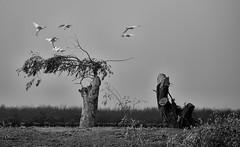 Egrets (meshkt) Tags: bird avian egret white