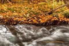 IMG_4780 (PrashantVerma) Tags: california eastern sierra river water fall foliage autumn color canon 6d prashantvermaphotography
