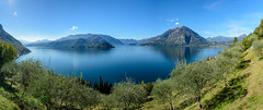 D71_9289-Pano.jpg (David Hamments) Tags: olivegrove lakecomo hike varenna northernitaly castellodivezio trek verticalpanorama fantasticnature