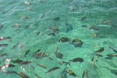 Silueta de pescados (Evelio AD) Tags: fish sea mar méxico mex mexa peces agua water deep blue ocean calm animals wild