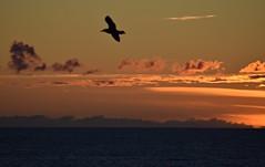 Sunset (kadege59) Tags: sunset sky clouds sea lønstrup danmark dänemark denmark norden north northerneurope nordjylland nordjütland europe europa wow weather nikond3300 nikon