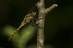 _IMG3643 (andrzejreschke) Tags: insects reptiles plants grass nature butterfly lizard moss flowers beauty beautyofnature