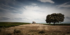 hechicera (*BegoñaCL) Tags: dolmen prehistory megalithic stone sky cloud tree landscape euskadi summer begoñacl