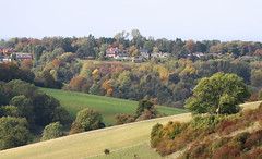 1S9A1596 (saundersfay) Tags: botleyhill view autumn downs trees