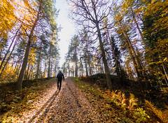 Walking in Pölhö island in Kuopio (VisitLakeland) Tags: finland kuopio kuopiotahko lakeland autumn forest hiking luonto luontokohde maisema metsä nature outdoor retkeily scenery syksy walking