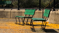 Awaiting Weight (charliehudson1950) Tags: yellow green bench north point park