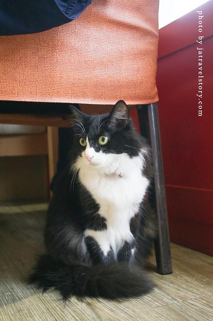 貓旅行咖啡輕食館 沉浸在貓海之中~多隻貓咪陪伴用餐好幸福!【台中美食】 @J&A的旅行