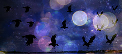 Nighttime Flight (soniaadammurray - On & Off) Tags: digitalphotography manipulated experimental collage abstract birds sky clouds stars nighttime picmonkey artchallenge fly nature bokeh bokehwednesdays exterior skyscape