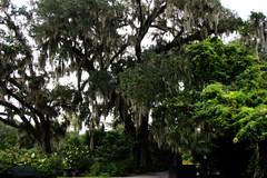 Magnolia Plantation, Charleston SC (rowebal) Tags: charleston southcarolina southern charms beautiful magnolia plantation green photography lights landscape