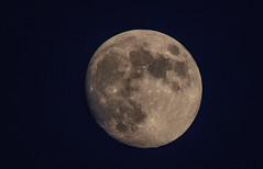Moon (Torok_Bea) Tags: moon fullmoon szeptember september nikon nikond7200 d7200 tamron tamron150600 natur night bluehour kékóra telihold nature home beautiful lovely