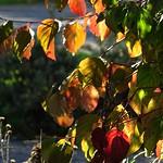 Herbstlaub im Sonnenschein thumbnail