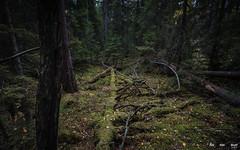 Urskog-3806 (jarud) Tags: 2018 norge norway notodden urskog