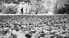 fall [2] (frax[be]) Tags: streetphotography atmosphere autumn 23mm fuji outdoor noiretblanc monochrome poetry grain composition blackandwhite bnw bw silhouette