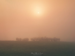 Morning's sheep (Mimadeo) Tags: sheep flock livestock farm field grass agriculture white farming meadow countryside animal rural pasture farmland woolly herd outdoors group shepherd fog foggy mist misty morning copyspace warm beautiful