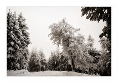 Paysage G26 Pb1 Rz Rt Bd2 Rd1 IMG_3154 (thierrybarre) Tags: hiver neige glace froid montagne gel arbre cristal landscape mood mist highkey