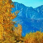 Hunting Trail - Alaska thumbnail