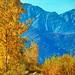 Hunting Trail - Alaska