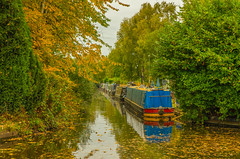 An Old Favourite (williamrandle) Tags: netherton dudley westmidlands uk england blackcountry withymoorisland narrowboats boats canal dudleyno2canal water reflections colour autumncolour gold green outdoor nikon d750 tamron2470mmf28vc trees boat tree