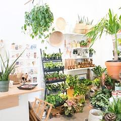 🌿🌿🌿 (The ZEN Succulent) Tags: the zen succulent terrarium instagram