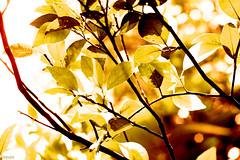 IMG_2421_randm(f4)_edw (permadisulaksonobayu) Tags: canon kissx50 eoskissx50 outdoor nature dusk antumn bokeh abstract
