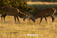 On the Rut