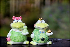 frogs.........pepper and salt (atsjebosma) Tags: perfectmatch frogs pepper salt atsjebosma 0ctober 2018 cllection collection macromonday