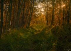 Twin Lakes (J.R. Krueger) Tags: nature camping rayapro sunrise aspen cannon6d fall twinlakes sierranevada