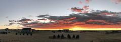 FireSKy_1 (northern_nights) Tags: sunrise firesky goldenhour pano panorama cheyenne wyoming red sky clouds dawn