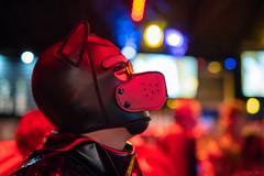 DSC08502 (Kory / Leo Nardo) Tags: frolic party frolicparty fur furry fursuit fursuiting sona fursona sanfrancisco california bar club theeaglebar eagle 2018 dance dj pupleo pup pupplay dog puppy rubber latex